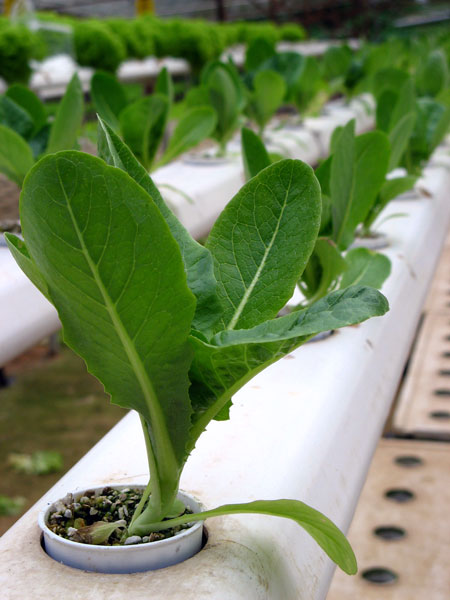 Hydroponics systems wholesaler uk